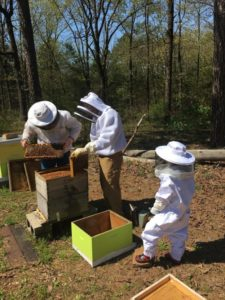 mentoring_beekeepers